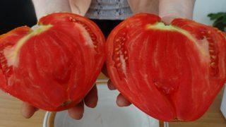 Ето как да имате едри домати които не се напукват
