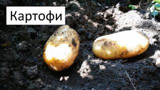 Градинар споделя съвети за богата реколта от картофи